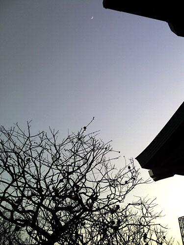 20070124-1.jpg